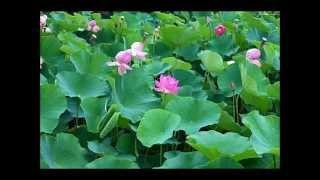 Nhạc Niệm Phật 4 Chữ (Tiếng Hoa) (Rất Hay)